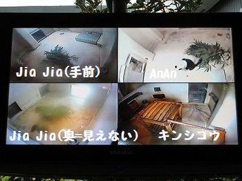 s-IMG_7315 - コピー.jpg